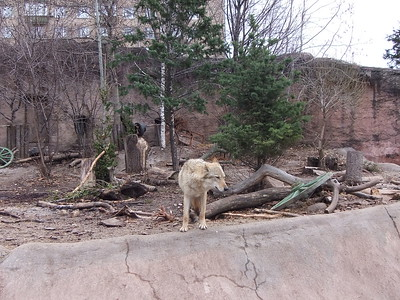2016-04-01, Moscow Zoo