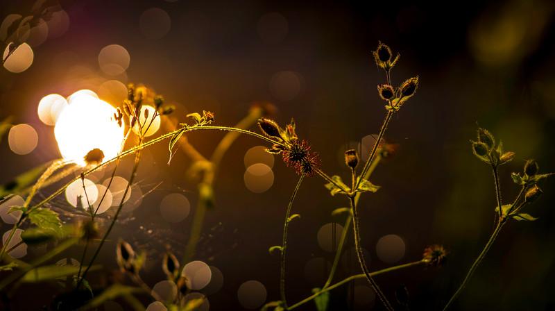 The Magic of Light-412.jpg