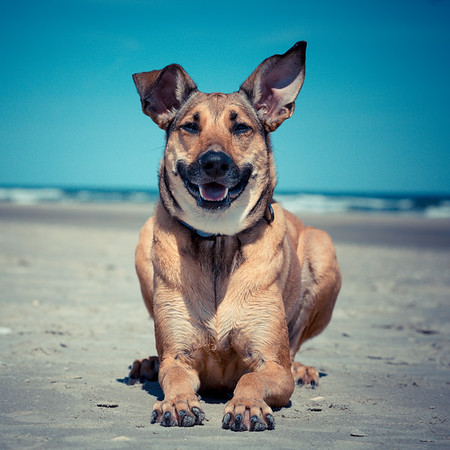 My Dog Wooja
