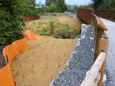 Whatcom Creek Restoration
