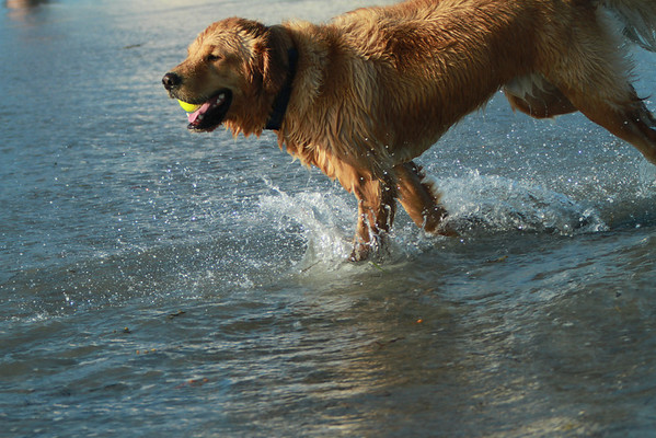 Higgins Beach Dogs