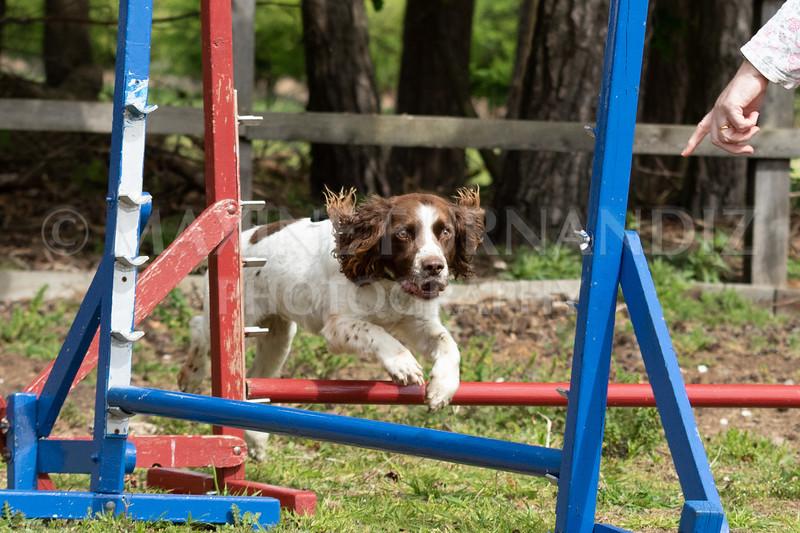Dogs-7911.jpg