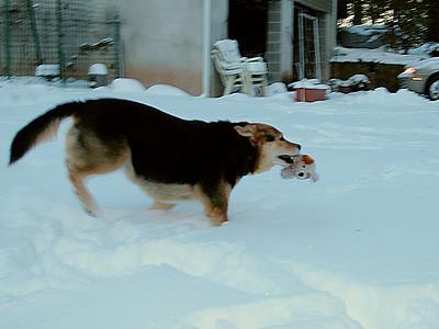 Maddie & Toy Puppie Snow Play