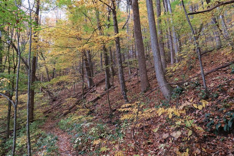 Farlow Gap Trail -- 3,550'
