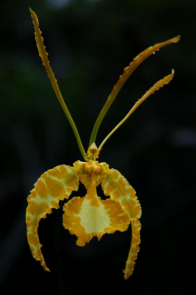 orchids 09 133.jpg