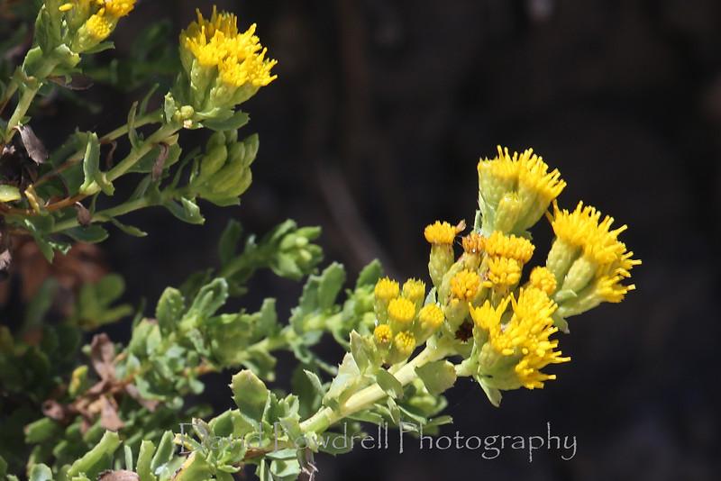 35 Yellow plant.jpg