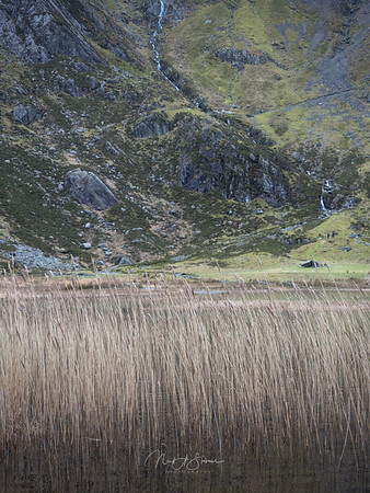 Grasses of Llyn Idwal