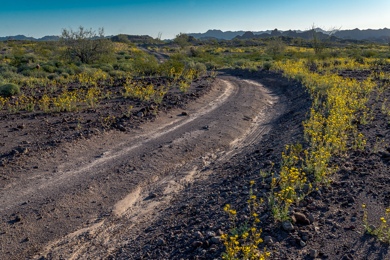 Dirt Road in Desert #1