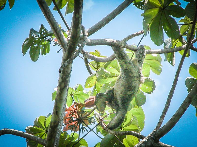 330 Sloth at MA 1.jpg