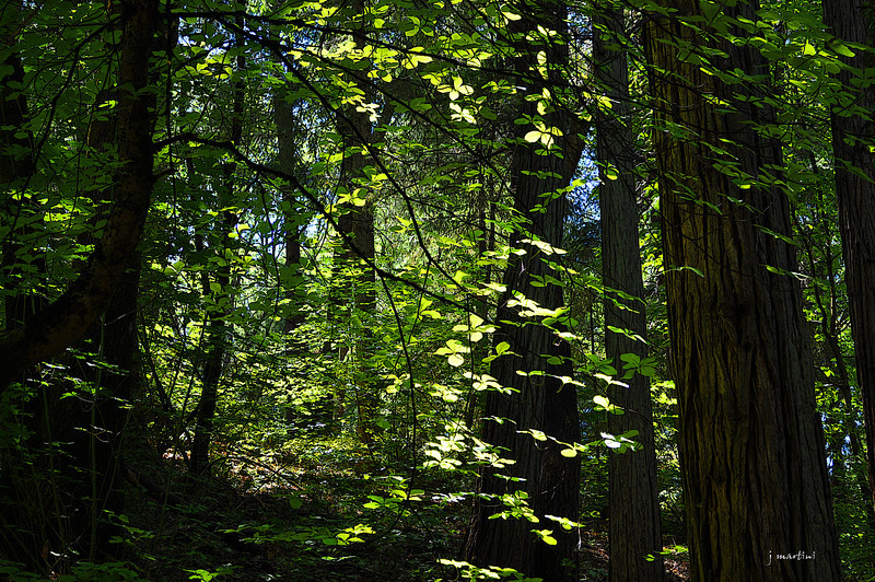 forest green 6-21-2013.jpg