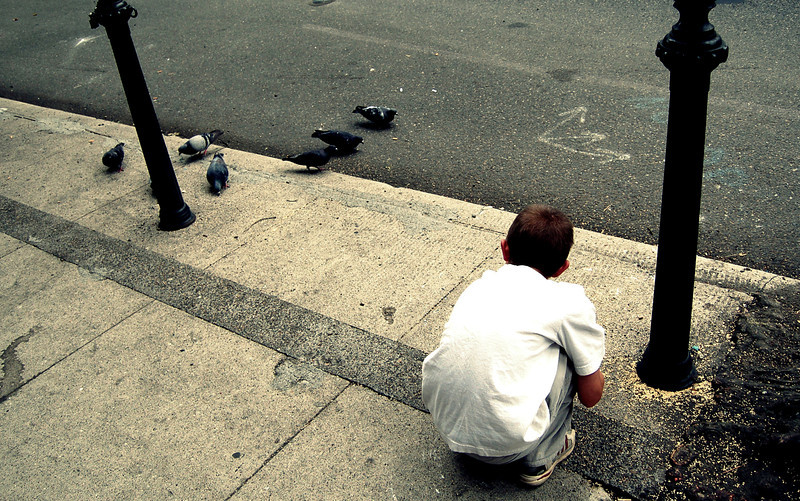 pigeons-1.jpg