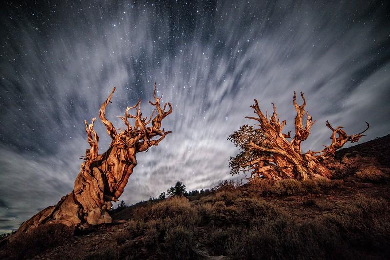 Bristlecone night.jpg