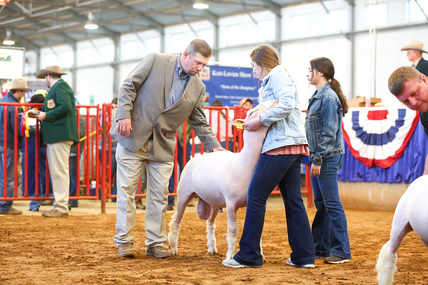 Open Breeding Sheep Show
