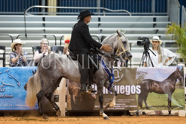260-Fino Schooling 4yr Colts and Geldings