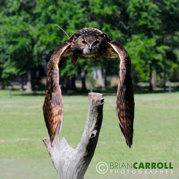 MMG Birds_of_Prey_2012_4.jpg