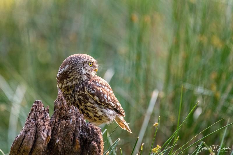 The Little Owl Shoot-6353.jpg