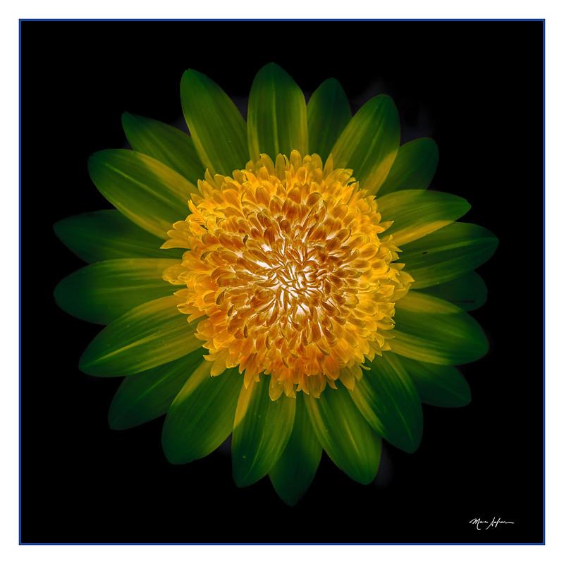 Sunshine Yellow Green.jpg