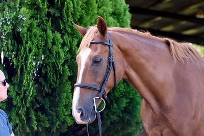 2016-17 Equestrian