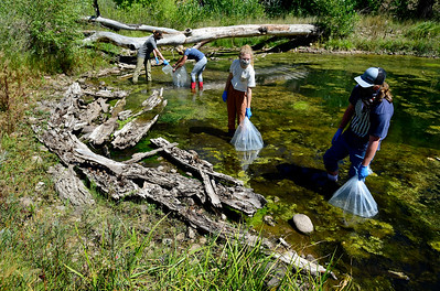 Photos: Northern Red Belly Dace Released into Pond Near Lyons