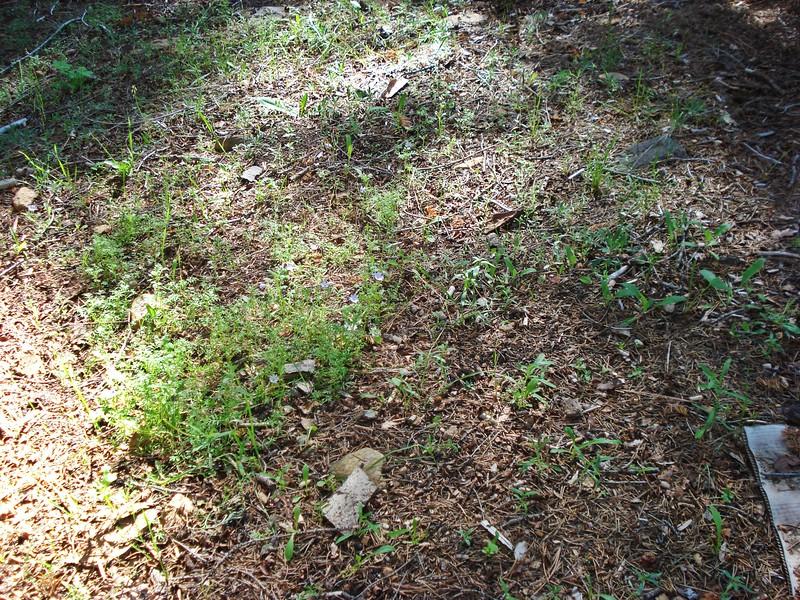 06-06-2015 First Watering Backyard Project (16).JPG