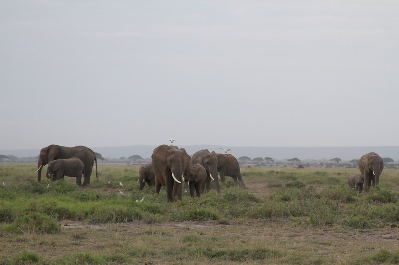 Kenya 2019 #2 422.JPG