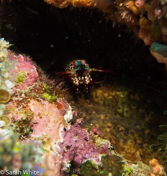 Maldives 2012-328.jpg