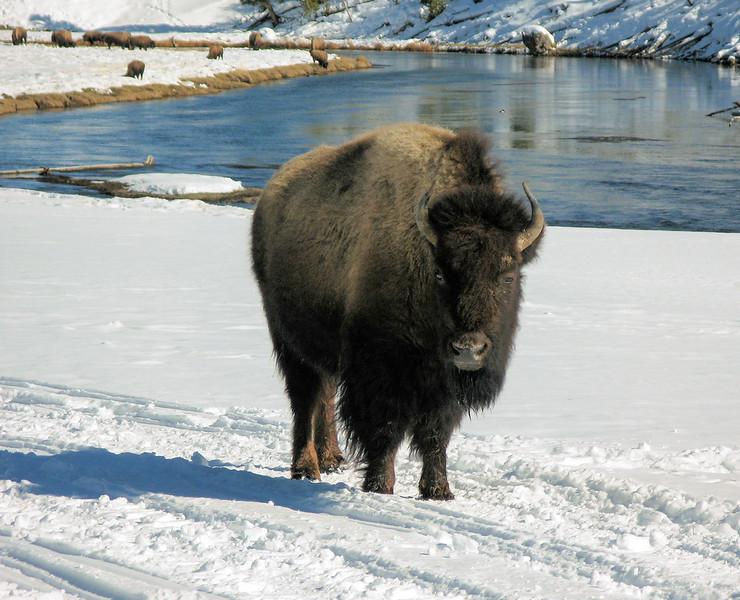 Yellowstone_025.jpg