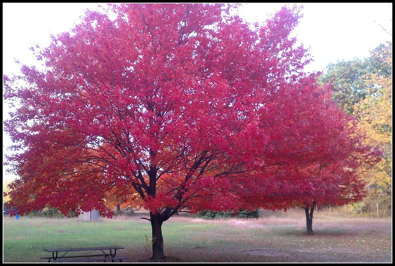 fall (7).jpg