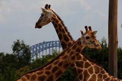 Taronga Zoo, Sydney, 7th January 2009