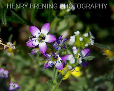Micro Photography