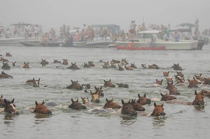 Chincoteague Island Pony Swim #1