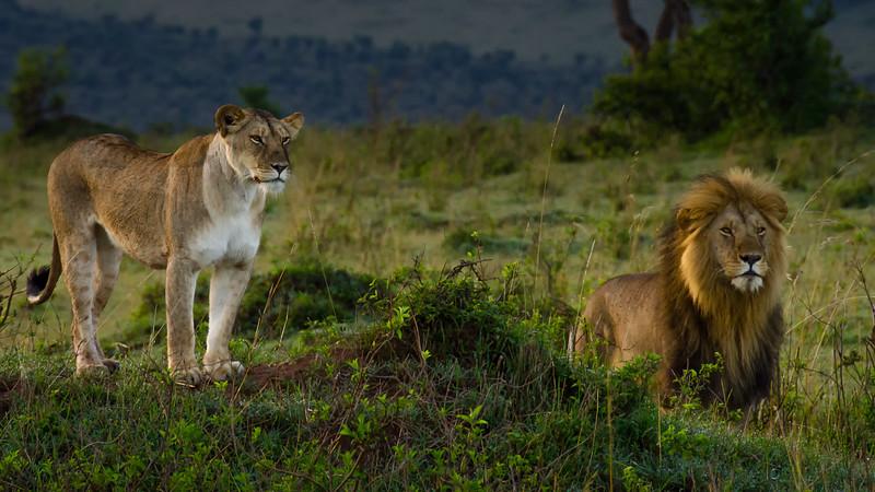 Lions-0124.jpg