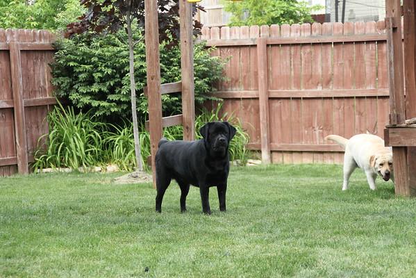 Dogs In Spring 2012
