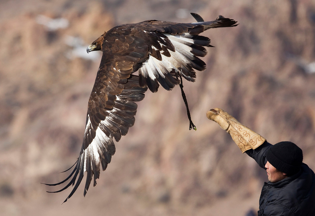 . A Kazakh hunter releases his tamed golden eagle during an annual hunting competition in Chengelsy Gorge, some 150 km (93 miles) east of Almaty February 23, 2013.  REUTERS/Shamil Zhumatov