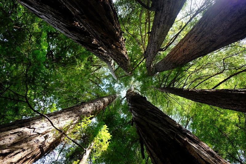 California Day 4 Big Basin 05-29-2017 22.JPG