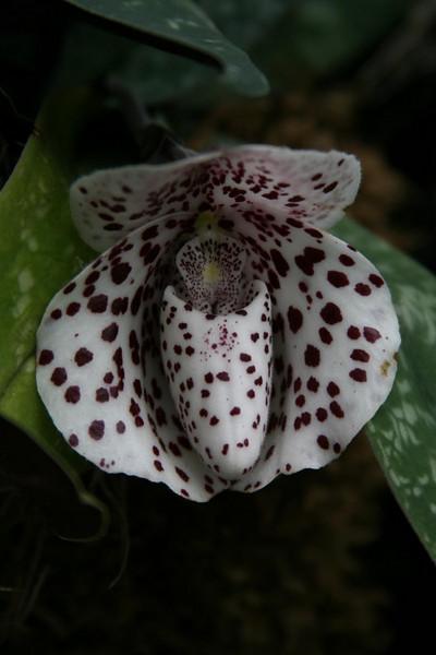 orchids 09 157.jpg