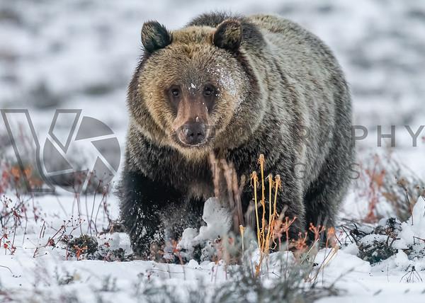 Wildlife/Landscapes/Fineart