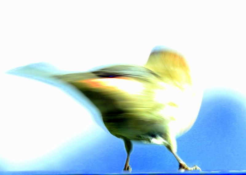 birds (139).JPG