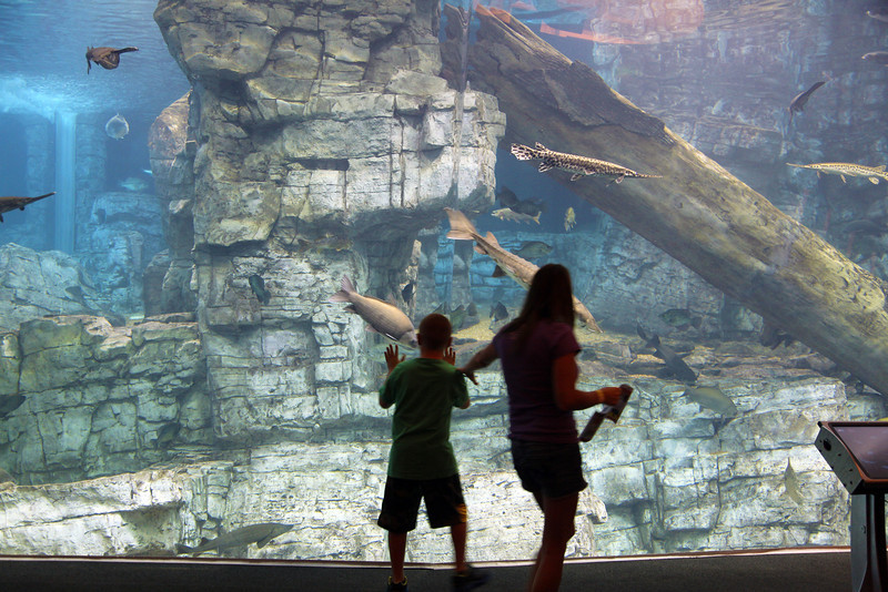 We watch children watching the freshwater fish ...