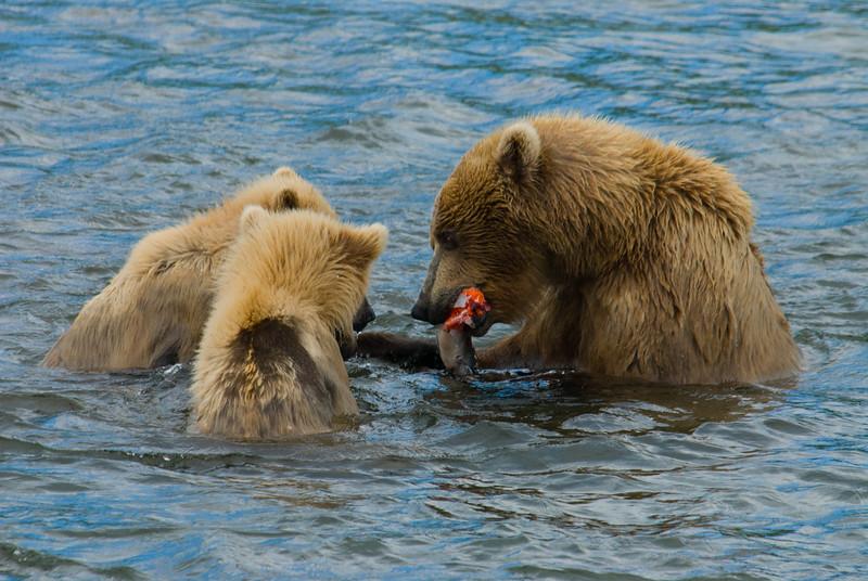 Flo Feeding Cubs