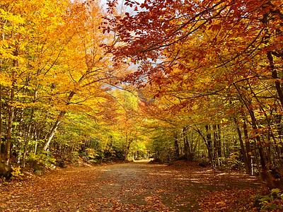 Best of NH White Mountains Falls Foliage