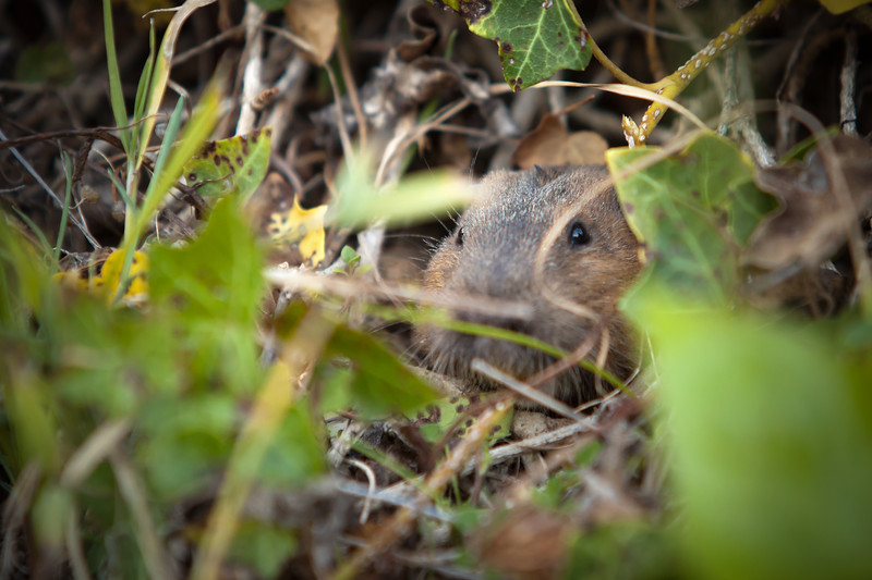 This little guy is shy, but not completely scared away by my big lens