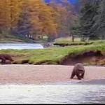 john-west-red-salmon-bear-fight.mov