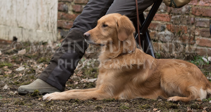 Dogs-5641.jpg
