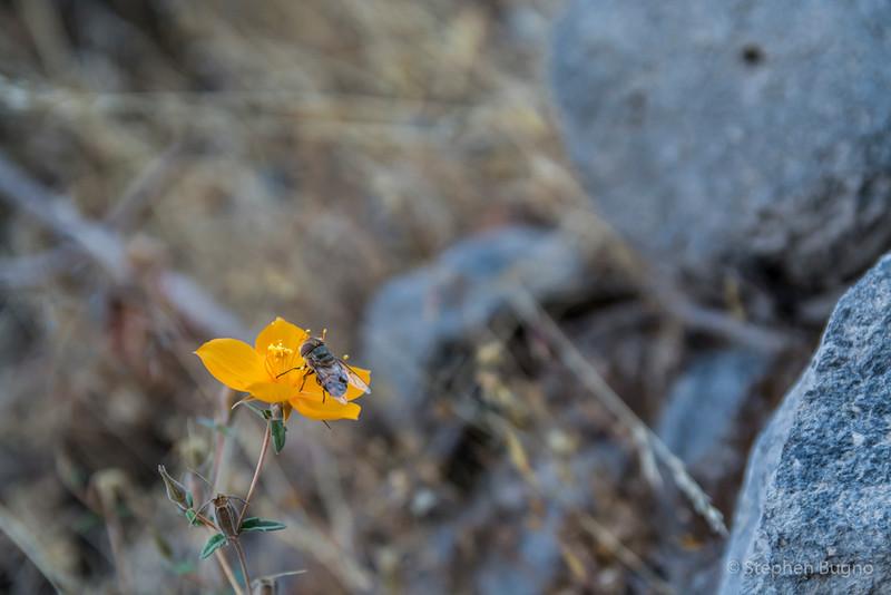 Colca Canyon-1323.jpg