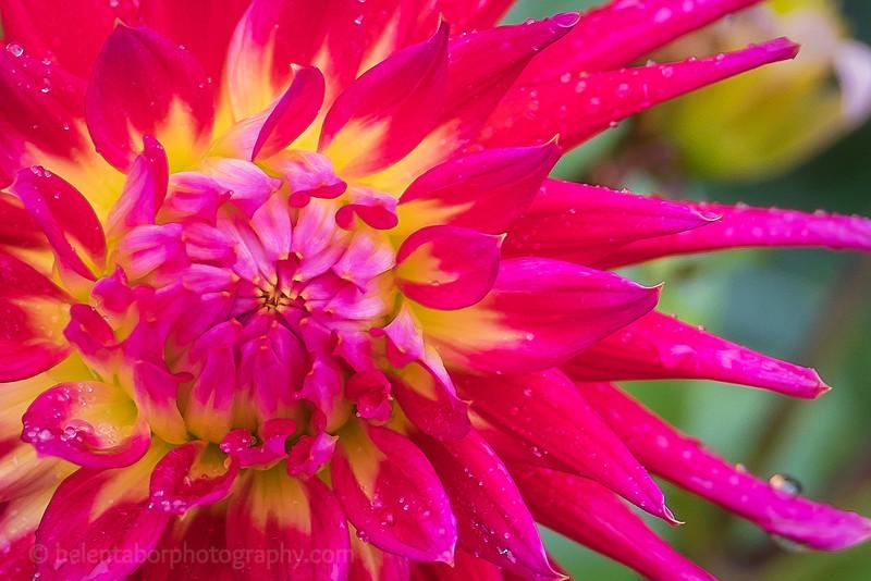 Louise's flower close-ups-7.jpg