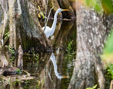 Florida ~ Everglades