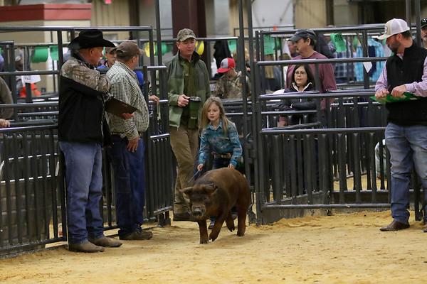 Swine-Durocs