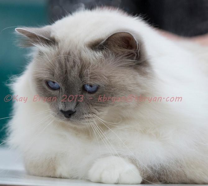 CatShow2014121.jpg