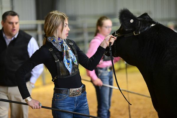 Junior Steer Show